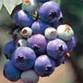 blueomi